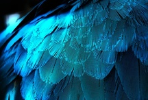 Feathers: in blue