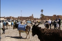 May 2013 Country of the Month: Morocco / Travel along with SCOLA as we learn about Moroccan languages, food, and culture!