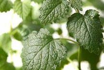 Herbs We Love