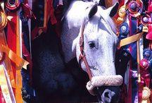 Horse = life❤️