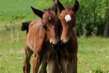 Horses / by Tina Allgeier