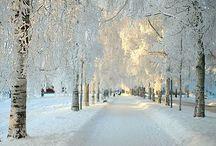 Winter | Wonderland