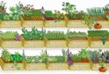 Gardening and Compost / Guides and activities for cultivating veggies and herbs in the soil (cue reference to parables about scattering seeds on soil)