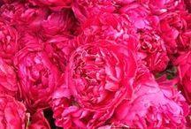 Flowers / by Helen Stewart {Curious Handmade}