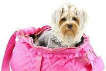Dogs of Glamour Pet Shop New Arrivals 2015 / These are our very best new arrivals for your baby aka your dog!
