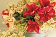 Kukkia ja Kransseja / Christmas flowers, bulbs and wreaths / Kukka-asetelmia, kransseja ja hoito-ohjeita kukkasille!