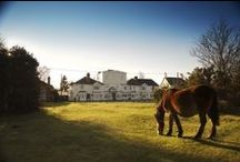 Hotels In The New Forest / The New Forest has a huge selection of holiday accommodation ranging from 5 star international award winning luxury hotels, cosy bed and breakfasts or your very own holiday cottage!