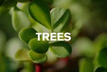South African Indigenous Trees GreenForBlue / Consider the environment. Consider Volvo. Green For Blue. / by Volvo Car South Africa