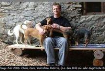 Pflege Hunde - Care Dogs / Bilder Galerie meiner Pflegehunde - Pictures Gallery of my Care Dogs