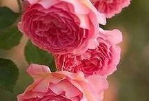 kukka-aihe