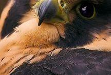 ptaki 4/ birds