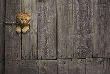 koty i psy/ cats & dogs