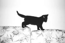 Cats Photos Black and White / by Hanneke Verstraate