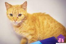Kotki do adopcji / Kotki, które mamy pod opieką i szukamy dla nich domów stałych