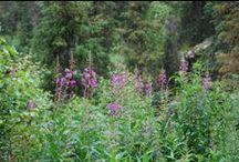 Travel Guide: Alaska / All things Alaska - www.GreenSpot.Travel