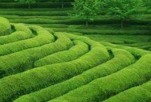 Green as grass / by Hanneke