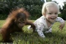 Забавные обезьянки / Прикольные фото обезьян.