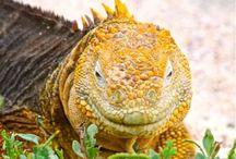 Lizards / Natural beauties