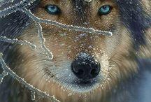 Cute & beautiful animals
