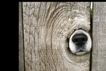 Must Love Dogs / by Madi Davis