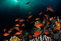 Under the Sea / by Lisa Limbrick