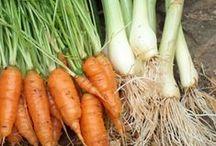 Organic Gardens - Veggies & Herbs / by Dyana Perches