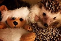Hedgehogs / by Krista H