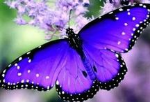 Butterflies / Beautiful, beautiful butterflies!  Butterflies symbolise transformation.
