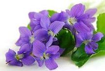 Violets / Violets