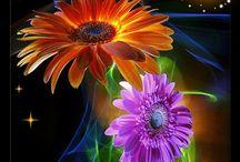 Flowers / by Dianne Leew