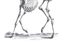 Skelestag