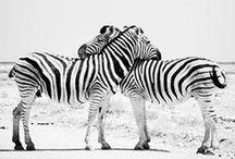 LOVE Animal Side / wild world #wild #world #animal #animales #cute #love #friends #dog #cat #family