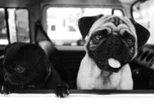 LOVE Pugs / <3