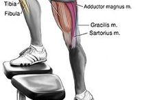 Yoga   Exercises . Anatomy