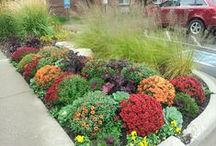 Fall and Winter Planters / Some examples of fall and winter planters done by Barrett Lawn Care.