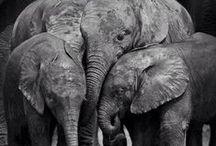 ~ElephantLove♡~