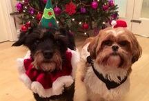 Blacks Christmas Pets / Blacks Pets enjoying the Christmas season