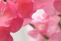 Colour Trends:  Everything's Rosy / by Crown Wallpaper & Fabrics