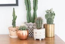 Cactus  Inspiration / Des cactus, petits et grands pour une déco cosy, tendance. Des idées d'associations