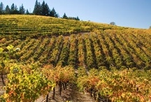 Vineyard Photos / by Geyser Peak Winery
