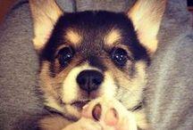 love animals!