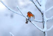 Orange Is everywhere and in every way / La vie en couleurs d'orange