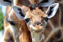 Animal Fwendzzzzzz <3 / I LOVE animals, no doubt about it!!!!!!!!!