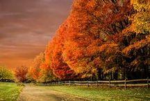 Autumn / September October November Autumn