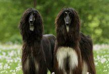Dog inspiration ♡ / Inspiroivia kuvia kauniista koirista ja koiriin liittyvistä asioista ♡