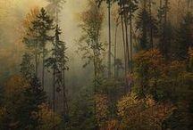 Woodwarg