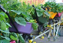 Idea's for the garden  / Idea's for the garden.  Anybodies  garden.  Not just mine!