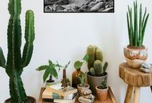 ▲Cactus & Succulents▲ / Vegetation hobby