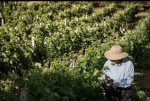 Lyrarakis @ Work / The various activities in the Vineyards, the bottling, the making of the wine, events and the sales dpt!