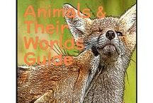 Animals and Their Worlds / A one-year science based program for K-4th graders. Meet different animals and the different landscapes they live in! Learn about their habitats, their survival skills, the ecological systems that surround them and much more!
